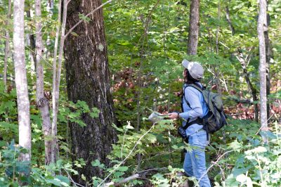 Biologist monitoring tree growth