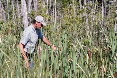 Environmental monitoring in marsh/wetland