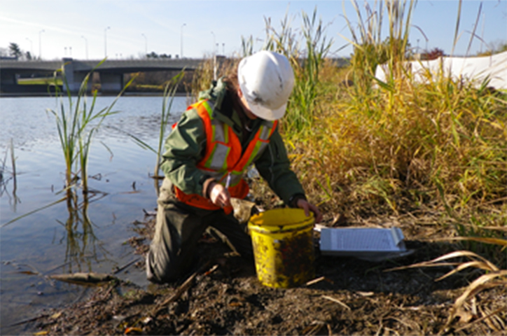collecting samples, environmental consultant, biological consultant