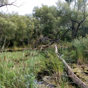 Wetland on a severance property
